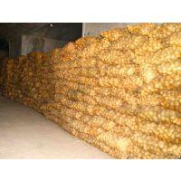 脱毒土豆种子荷兰15是粮食作物种子