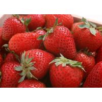 供应四季草莓苗 温室草莓苗