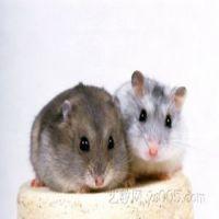 常州灭鼠公司 常州天宁区的灭鼠公司