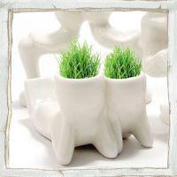 广告促销礼品 迷你植物 秘密小花园 X恋人