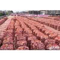 2015年金辉颗源种业脱毒大蒜种子质量