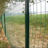 供应果园圈地荷兰网 批发绿色浸塑铁丝荷兰网 涂塑荷兰网