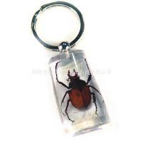 水桶型 水晶透明昆虫标本琥珀钥匙扣 广告促销活动赠送礼品