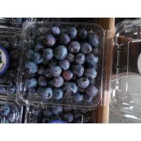蓝莓的种植与管理 买蓝莓苗送种植技术 3年蓝莓苗批发价格