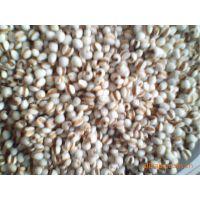 供应  贵州   90型   薏仁米(薏苡仁、薏米)