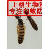普陀区灭白蚁公司|餐厅杀白蚁|上海市白蚂蚁防治