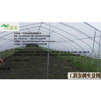 供应揭阳蔬菜大棚FC-019、蔬菜大棚厂家、芳诚温室--18988967562