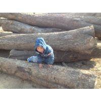 常年供应楸木原木黄金楸灰楸木适用于复古家具