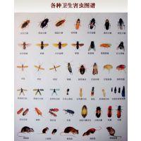 郑州灭虫公司上门灭鼠灭害虫