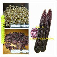精选黑玉米种子