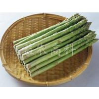 芦笋种子批发贵州芦笋种子供应