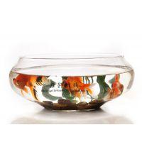 小额批发 透明大号水培吹制玻璃花瓶 玻璃鱼缸水族箱 创意生态瓶