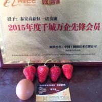 红颜草莓苗品种、珠海红颜草莓苗、乾纳瑞农业科技