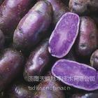 供应黑土豆种苗