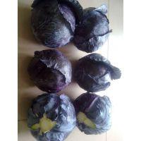 哪里有可供出口蔬菜 保鲜胡萝卜出口港澳台请联系13061336833