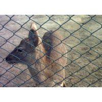 动物园护栏网-千智护栏网厂供应优质养殖防护网