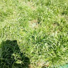 供应边坡植草防护专用生态袋 生态袋厂家,公路护坡生态袋