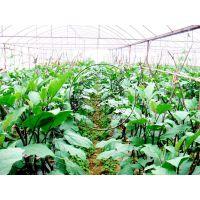 蔬菜种植大棚——日光温室,塑料薄膜大棚,简易棚,连栋温室等