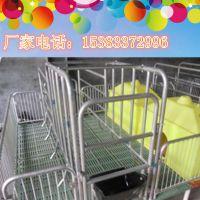 沧州养猪设备厂家供应高配置新型母猪产床