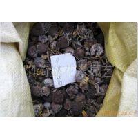 低价批发非洲菊种子 榉树种子 朴树种子 榆树种子