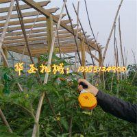 大棚专用新款藤蔓绑枝机 西瓜种植专用小型手动绑枝机