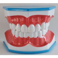 宏思特口腔教学模型HST-N12蓝色刷牙模型