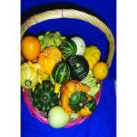 可混批 炫酷表情 绿色种植 创意园艺花卉花籽 玩具南瓜种子8粒
