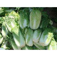 农副产品配送|宏鸿-质量|龙岗农副产品配送厂家