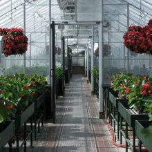 山东德州蔬菜种植温室、养殖温室、水产养殖温室整体方案输出