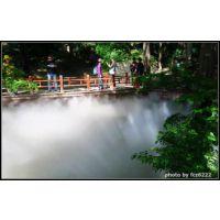 温泉度假区人造雾景|灯光节雾化景观|公园雾森工程