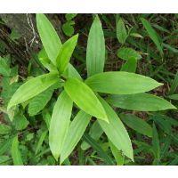 供应玉竹提取物-西安青萍植物工程技术有限责任公司
