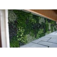 武汉牢固持久模块式植物墙做法(完整的灌溉系统维护)