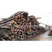 余姚地区成浩木材经 大量供应松木桩 打桩木齐全4米