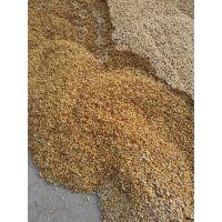 枳壳种 枸橘种 无病虫害 颗粒饱满
