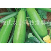 鼎优农业厂家直供西葫芦种子-曼玉