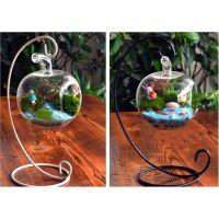 批发苔藓微景观生态瓶 DIY创意小苹果玻璃瓶礼品 迷你植物盆栽