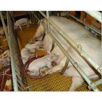 乌兰察布 养殖场玻璃钢漏粪板 微孔玻璃钢格栅【大小格格栅板】