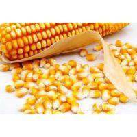 各种粮食作物种子,