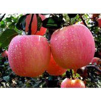 散称碘硒苹果