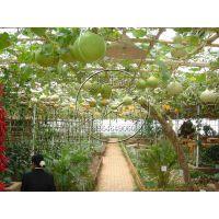 玻璃/PC阳光板生态农业观光温室造价——智能连栋温室,休闲餐厅展厅