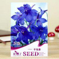 彩包观花种子-/耐寒 春播/盆栽花卉/阳台盆栽栽培容易 千鸟草种子
