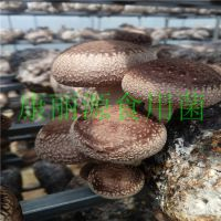 山东青岛出口花菇菌棒保水膜、香菇菌棒