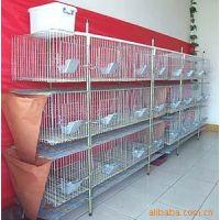 浙江温州现代化肉鸽养殖鸽子笼的价格#优质鸽子笼生产厂家