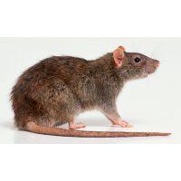 孟州灭白蚁服务温县灭老鼠焦作博爱杀虫工程灭白蚁