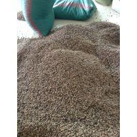 专供优质杜英种子 今年杜英种子价格 杜英种子批发