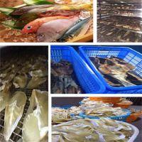 海鱼烘干设备,肇庆烘干设备,江门福瑞斯永淦