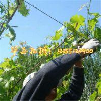 华圣小型绑枝机 葡萄绑枝机 果木种植绑枝机