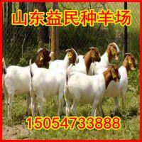 纯种波尔山羊羔羊 波尔山羊养殖效益 怀孕大母羊价格