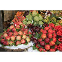 振德厂家供应水果、蔬菜打浆机 多功能不锈钢打浆机