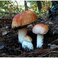 野生菌烘干设备哪家好|保山野生菌烘干|福瑞斯永淦优质商家